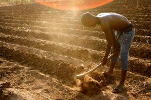 Africa food security