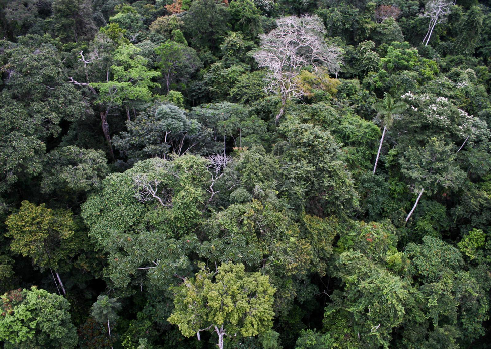 Diverse canopy of Amazonian forest in Peru