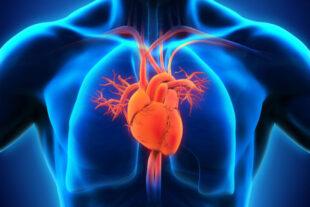Wagenseil-Artery-